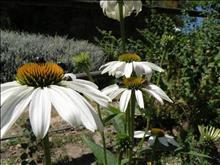 Mini-VIP Hania – Botaanikaaed
