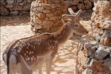 Park Askos + Xigia Sulfur